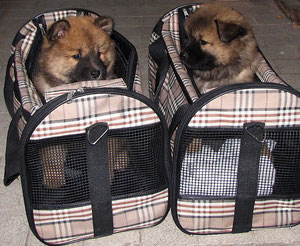 ... Ronja und MexX in ihren Flugtaschen