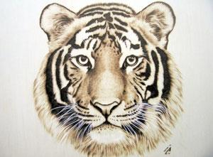 Tigre di Ilaria Andreucci