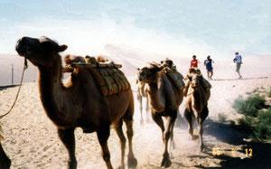 敦煌の鳴砂山でラクダの後ろを歩く隊員