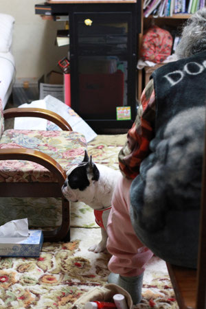 2012.3.4 おばあちゃんとハナ。