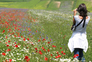 Wildflowers at Castelluccio.  Photo by N. Joseph