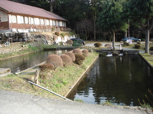 ニジマスの池