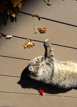 Katzenmädchen Hermine beim Sonnenbad