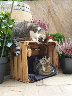 Die Katzenmädchen