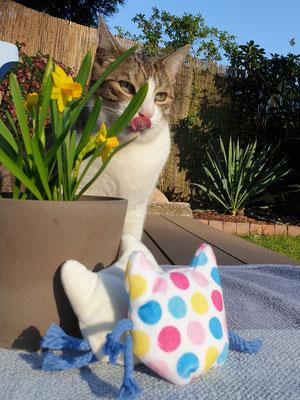 Katze Kasi und die Catnipkissen