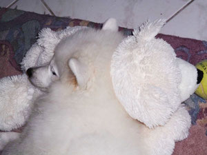 Hana als Eisbärchen