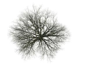 Orthogonaler Baum ohne Blätter für Ihre Architekturvisualisierung.