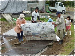 建部雄町の播種