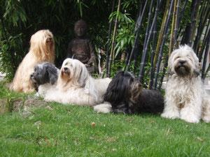 Sherry, Caro, Lulu, Luna, Rani (v.l.n.r.)