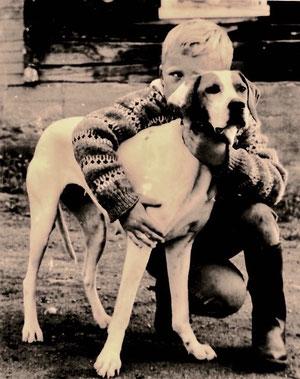 hier wurden die schönsten Pointer-Hunde gezüchtet