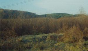 Карга куагы