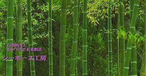 トップページ竹林の画像 神秘的で素敵なデザインですね