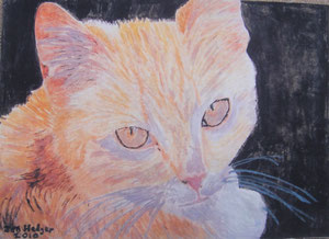 Romanian Cat by Jon Hedger - watercolour painting ............  (c) copyright 2010