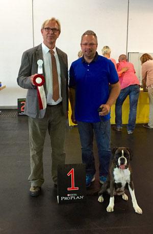 CACIB Bremen Karla Boxer Hund vonderwaldnielerheide Ausstellung