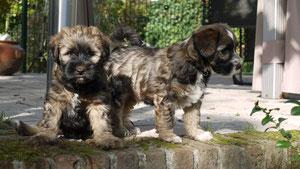 B-Wurf-Kinder - Balu und Bonny,,,