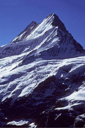 Schreckhorn 4078 m