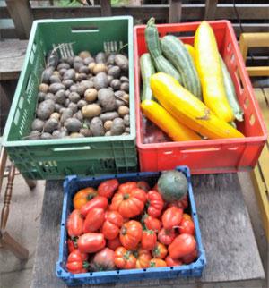 Auch im letzten Jahr haben wir wieder viele bunte, leckere Früchte geerntet.