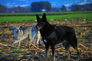Tasso und die Wölfchen