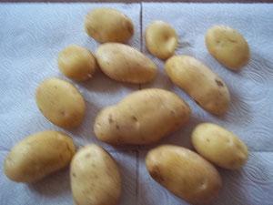 Pommes de terre Nicolas