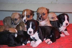 I cuccioli a tre settimane..che avrenno sentito??