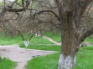 Paths in Careenage Ravine