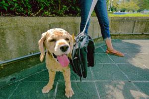 愛犬ハナ。 キャッチボールってのはおもろいなぁ~。