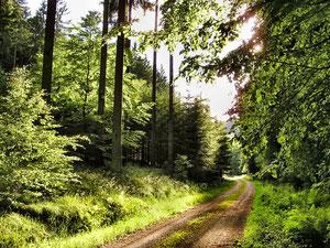 pilzreicher Wald im Spessart