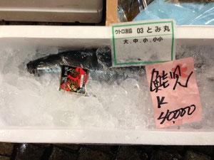 鮭児専門店,築地