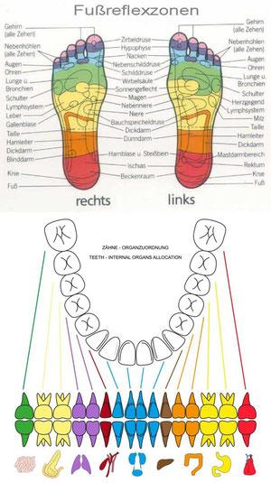 Wissen über die Zusammenhänge von Reflexzonen und Ihren inneren Organen oder Ihren Zähnen und psychologischen Aspekten wird Ihnen helfen, Ihren Organismus besser zu verstehen und geeignete Heilmaßnahmen im Krankheitsfall zu wählen.