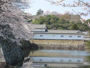 満開の桜越しに見る彦根城天守