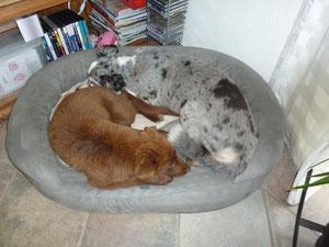 ... und Hazel darf inzwischen sogar bei Bonny im Körbchen liegen!!!