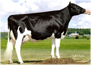 Scientific Roy Delicate-ET RC EX 91