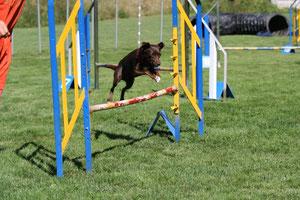 Mahagoni ist Zoes Hund