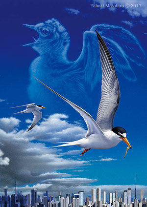 コアジサシ 野鳥 環境保護