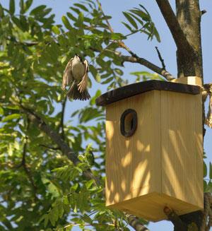 Скворечник. Для мухоловки. Купить домик для мухоловки. Купить скворечник с защитой летка.