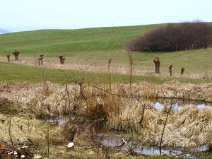 Feuchtgebiet Jungholz nach Gehölzrückschnitt im Frühjahr 2013 durch den Bauhof Hattenhofen