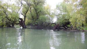 einer der Donauseitenarme