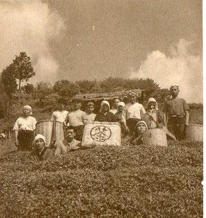 茶畑での集合写真