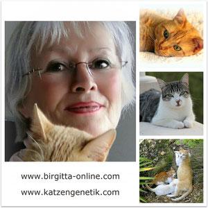 Birgitta  Kuhlmey mit Katzen