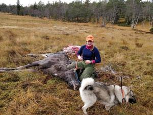 Vibeke mit ihrem Elchhund Kongpris und mit dem von ihr erlegten Jungelch