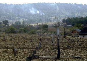 Nuovi coloni cancellano la foresta per l'agricoltura