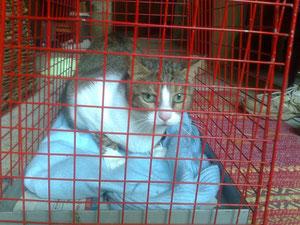 Betta attende di andare dal veterinario