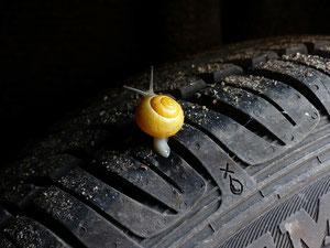 Reifen mit Schnecke