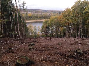 Trockenheit Wald Wälder Garten Gärten Borkenkäfer Fichtensterben Kahlschlag NABU Düren