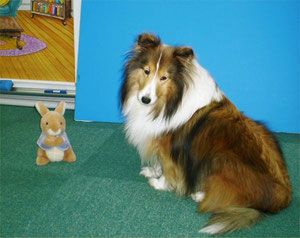 Sheltie is the Best! Erie