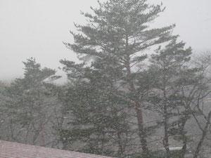 翌5日の朝は、雪が舞っていました!
