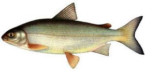 Фото с сайта: http://fisherbook.ru/node/138670