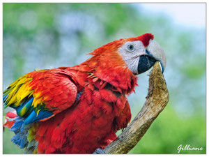 Parc zoologique de Champrepus