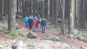 Mitglieder beim Waldspaziergang