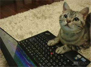 写真は「http://weekly.ascii.jp/elem/000/000/160/160269/」のものを拝借しました